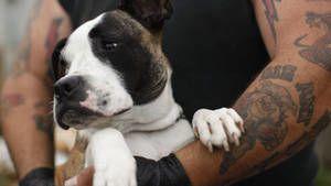 Zachráněná zvířata fotografie