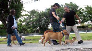 Reggie, Diva, Rocco & Vito, and Mugsy photo
