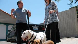 Reggie, Diva, Rocco & Vito, and Mugsy photo
