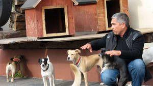 Luna a služební psi z jednotky K9 fotografie