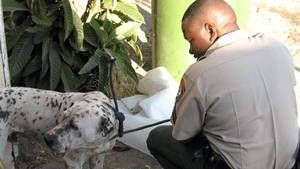 Hudson & Orchid, and LA Animal Control photo