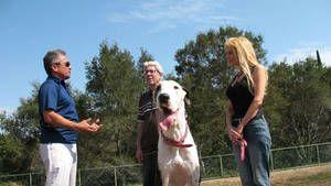 Reggie, Diva, Rocco & Vito und Mugsy Foto