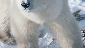 Attaque Arctique photo