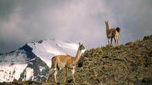 Patagonie, la vie au bout du monde Voir la fiche programme