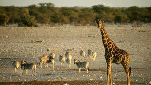 Etosha photo
