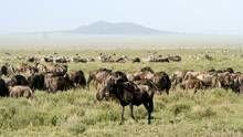 Serengeti Voir la fiche programme