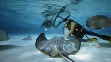 Les aventures de l'océan Voir la fiche programme