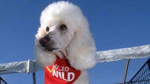 Dog Aerobics photo