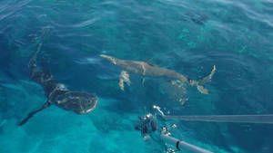 Animaux en tout genre - Requin et Guêpe photo