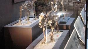 Drapieżniki sprzed tysięcy lat zdjęcie