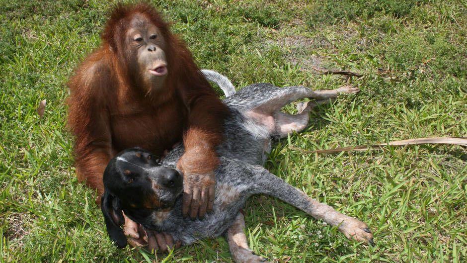 Animal Love Photos Bizarre Animal Friends National
