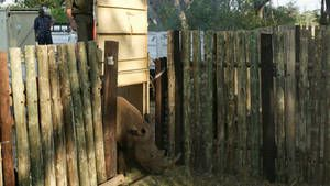 Die Rückkehr des Nashorns Foto