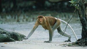Borneo Foto