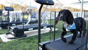 Hunde-Aerobics Foto