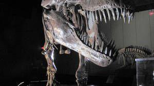Friedhof der Dinosaurier Foto