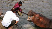 Hippos show