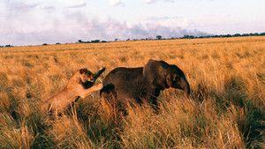Elephants and Lions photo