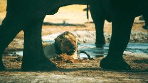 Elephants and Lions photo