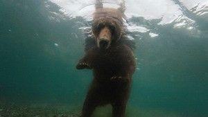 National Geographic - As Dez Melhores Fotos fotografia