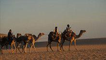 Sahara show