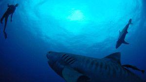 Undervatten liv foto