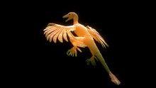Evolutions: Last Living Dinosaur show
