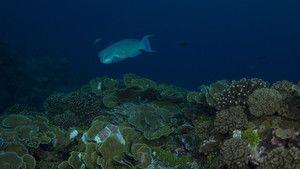 Raj za morske pse .
