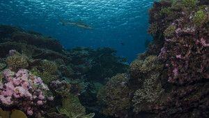 O Éden dos Tubarões fotografia