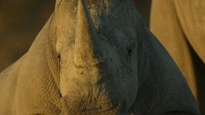 Rhino Rescue photo