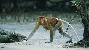 Borneo photo