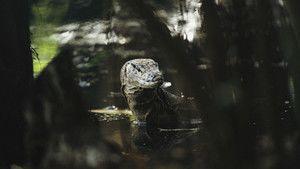 Borneo Bilde
