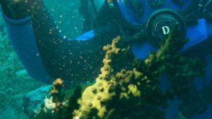 Cimetière sous-marin photo