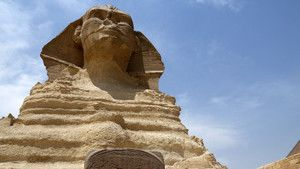 Sphinx Billed