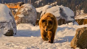 Grizzly Encounters photo
