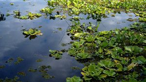 Amazonas fotó
