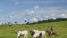 Amazónia film