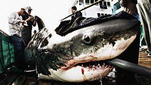 Vigyázat, cápák! fotó