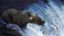 Vízesések, medvék, farkasok... film