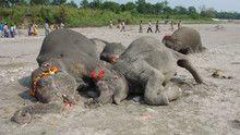 Elephant Graveyard show