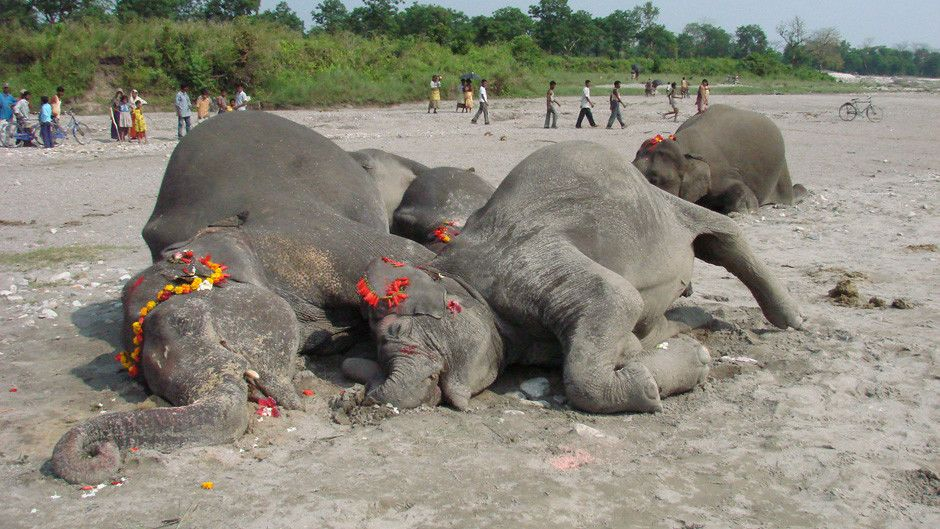 Elephant graveyard photos predator csi national geographic channel