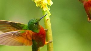 Colibris photo