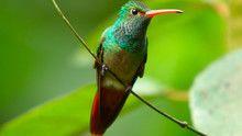 Cele mai mici păsări documentar
