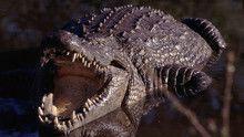 Croc Don show