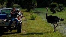 Természetes állattartás film