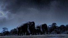 Rejtélyes elefánthalál film