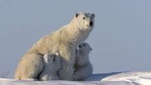 القطب الشمالي برنامج