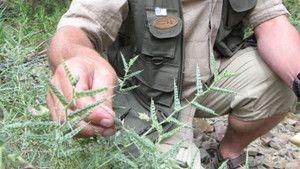 Seed Hunter photo