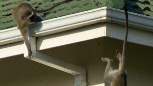 Street Monkeys photo