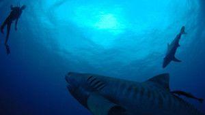 Underwater Oasis photo