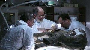 Baby Mammoth Surgery photo